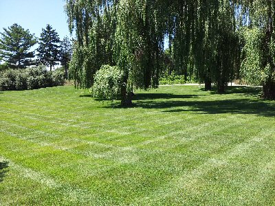 commercial lawn service mowing