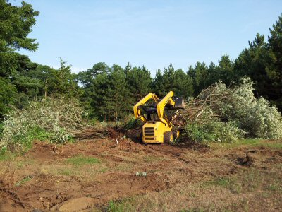 lot-clearing-tree-removal